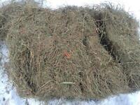 Second cut horse hay