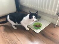5 year old cat free to good home