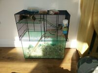 2 Gerbils compete with cage, food and bedding