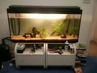 4ft aquarium with fluval 305 external filter