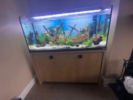 Fluval Roma fish tank