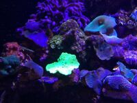 Reef tank Closing down Marine live rocks corals fishes for sale Leicester