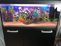 Fish Aquarium & Cabinet 3FT 120litres FULL SET UP with FISH (Just add water)