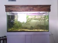 Large Fishtank/Aquarium and Accessories - COMPLETE SETUP WITH FISH minnows loach