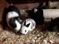 Lovely cute rabbits for sale