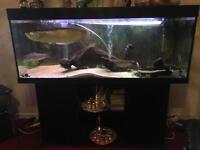 Juwel rio 5ft tank