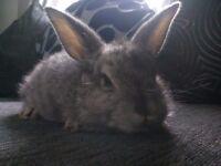 Beautiful baby bunnies 8 week old