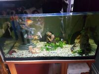 3ft fish tank. With stand and filter.