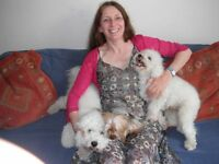 Dog Walker for Dog Walking, Pet Sitting, Pet Care, Feeding and Boarding