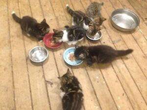 Kittens for sale Almost gone 2 more available!