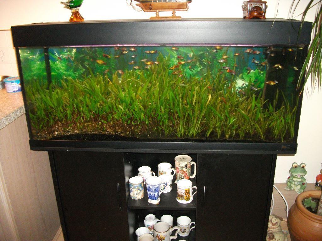 Super Rio 240 Aquarium - 1000+ Aquarium Ideas WA69