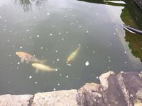 Selling my pond and all equipment