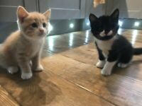 Kittens are both SOLD