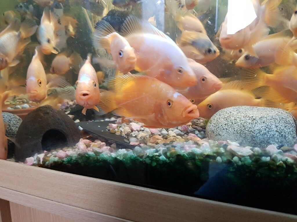 2 fish tank for sale