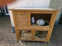 Rabbit with hutch cage and run