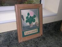 A framed and glazed print of a potted geranium.