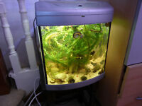 COLUMBIAN RAMSHORN SNAILS FISH PLUS PLANTS ETC