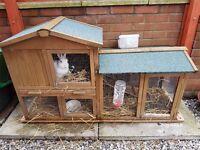 2 x Rabbits for sale inc. hutch