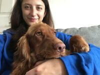 Caring and reliable dog-walker and sitter