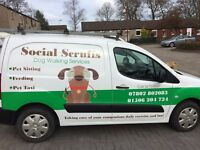 Social Scruff's Dog Walking