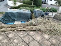 FREE - Cut Bamboo - c. 70 poles up to 3.5m