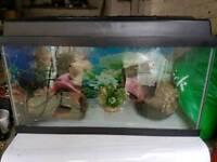 Fish tank, pump and ornaments
