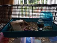 2 baby male hamsters and cage for sale