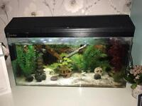 80 litre tropical fish tank complete with accessories