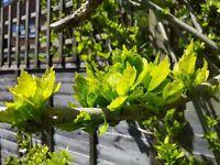 Assistant Gardener (Maintenance) - SW London & Surrey