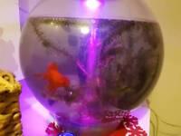 Fish tank with 10 fish £50 ono