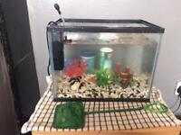 Fish Aquerium