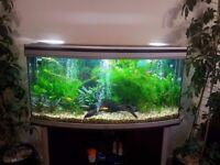 fish tank \ aquarium 265 L