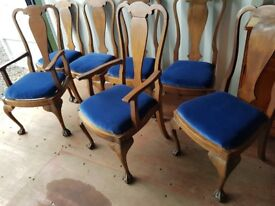 Set 6+2 antique dining chairs. Rich blue velvet reupholstered pop out seating.Ball & claw feet.