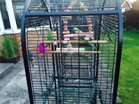 2 x indian ring neck parrots with the large cage
