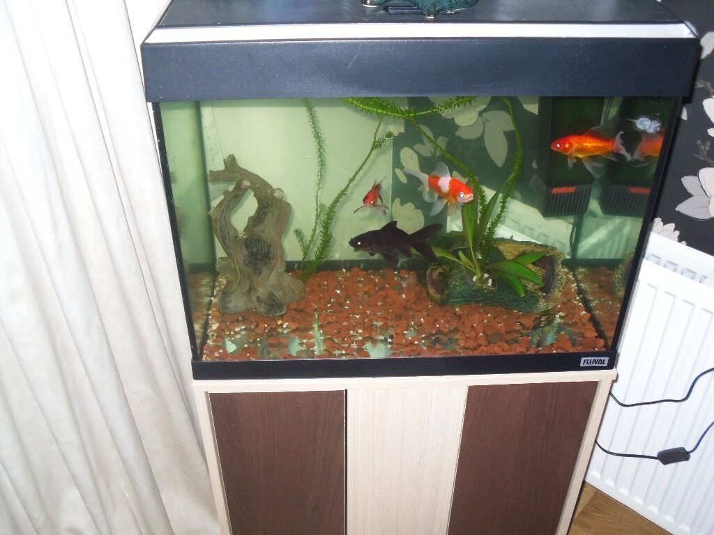 COLD WATER /TROPICAL AQUARIUM ON STAND.