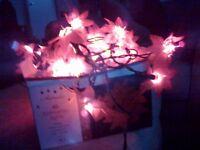 Poinsettia Indoor Christmas Lights. Box of 40