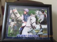 Rare Desert Orchid Race Horse Large Montage Framed Picture/Print approx 23 x 19 inches