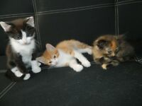 Kittens looking for a new home