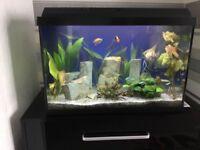 Juwel Primo 60ltr LED Aquarium in Black