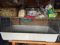 2 male rabbits indoor/outdoor cage
