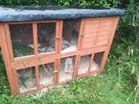 Rabbits and rabbit hutch for sale