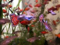 Tropical Fish 🐠