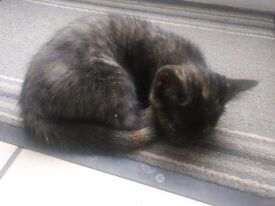 Very cute kitten. Female. Ready to leave.