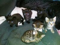 Beautifull kittens