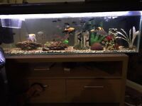 4ft Fish Tank and Fish for Sale