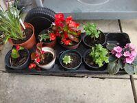 PERENNIAL FLOWERS/PLANTS SUMMER/AUTUMN