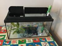 Fish tank with pump, light, plant, background & gravel cleaner.