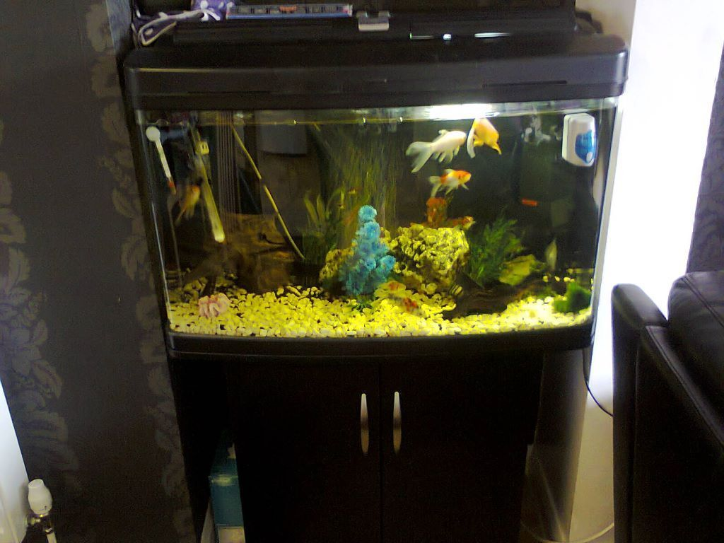 Beautiful modern bow fronted fish tank in castleford for Bow fish tank