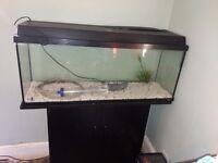 Aquarium and stand - 1meter long