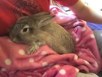 8month old rabbit